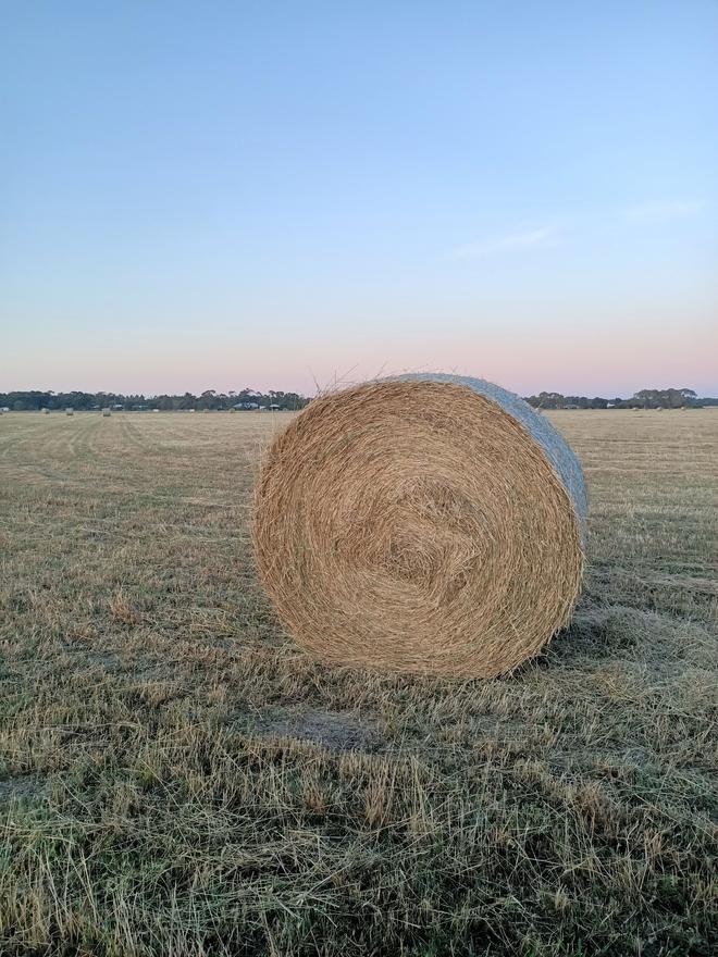 Rye Grass Clover Hay
