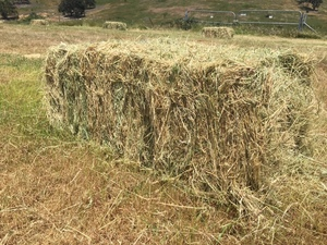 HORSE HAY / TESTED L/S GRASS