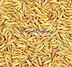 Eurabbie Seed Oats cleaned