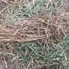 Wheaten Hay - 250 Bales
