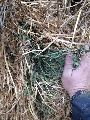 Lucerne Hay For Sale in 8x4x3's - 70mt