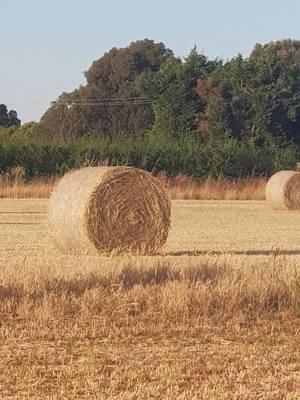 400 x Wheaten Hay Round Bales