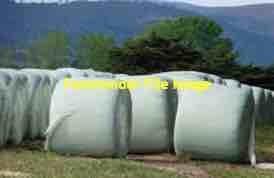 Millet Silage 4x4 Round Bales
