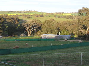 Country Lifestyle living close to town - COOTAMUNDRA - FOR SALE