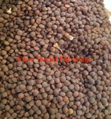 70 m/t Jimbour Lentils For Sale