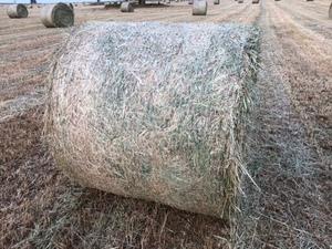 Oaten and rye hay