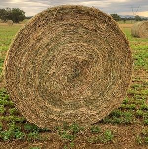 Lucerne/Clover/Rye Grass 5x4 round bales