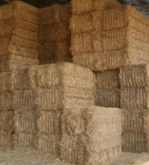 Wheaten Hay, 8 x 4  Big Square Bales