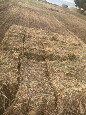 Rye Clover Small Squares. 3000 Bales