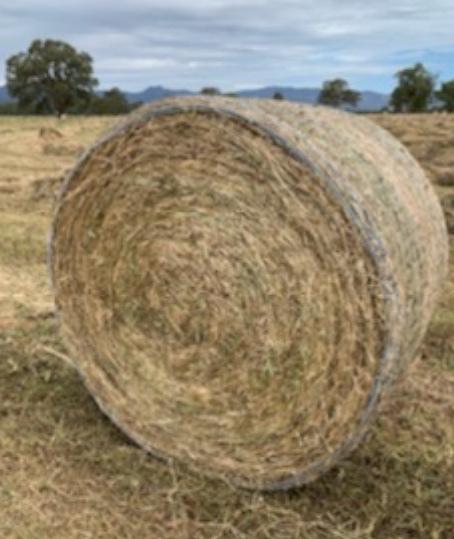Clover & Ryegrass Hay Round Bales