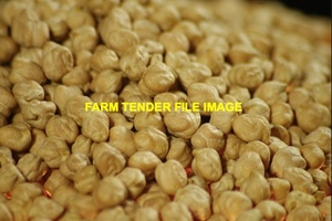 WANTED 250mt Kabuli Chickpeas for Export
