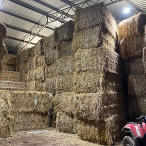 Wheaten Straw 500kg 8x4x3 Bales