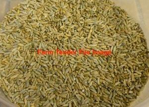20 tonne of Rye Corn