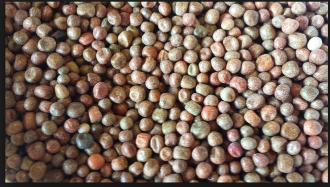 Parafield Peas WANTED 20-30t