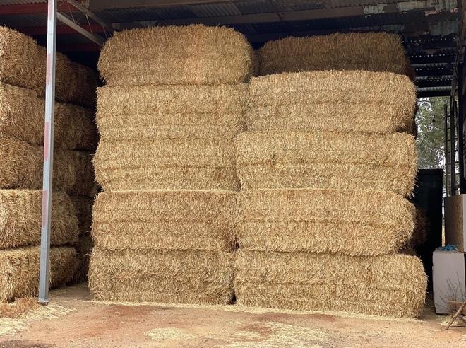 100mt Wheaten Hay 600kg 8x4x3 Bales