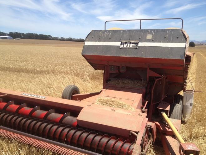 Massey Ferguson 3342 PTO Harvester