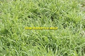 2mt Premier Digit Seed