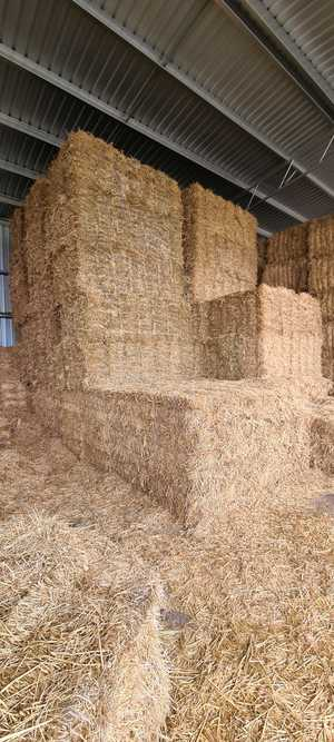 Wheaten Hay Small Square Bales