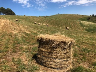 Meadow Hay lots of clover 4x4 rounds plus a few large