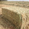 Shedded Wheaten Hay For Sale delivered in HD 8x4x3's