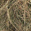 250 x 500kg 8x4x3 Bales of New Season Hay (2 Varieties)