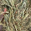 50mt Wheaten Hay 620kg 8x4x3 Bales - A1 Quality