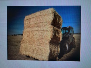 Under Auction - 200 x 5x4 Rolls  of Cereal Hay - Sold By The Ton -