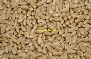 Wanted 3 m/t of Flanker Wheat
