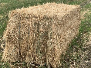 Wheaten Hay 864  Bales . 8x3x3