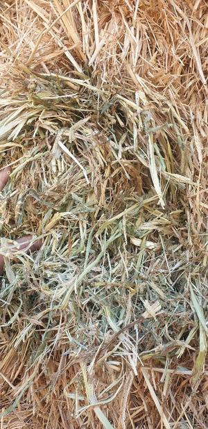 70 x 8x4x3 Bales of Moby Barley Hay 550 Kg's
