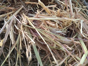 Oaten Hay Rolls - 400kg - Wrapped for weather protection (Not Silage)