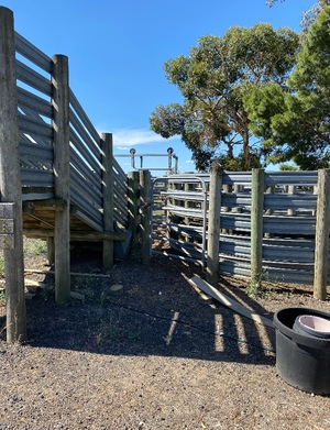 Cattle Yards and Crush