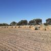 700 x Wheaten Hay 360kg 4x4-1/2 ft Rolls