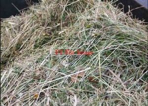Sub Clover Hay Rolls For Sale