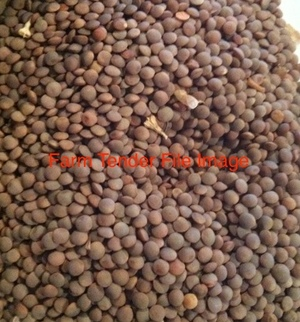 Single or Double Load of Brown Green Lentils