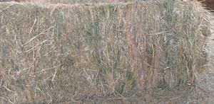600+ x Oaten Hay 8x3x3 Bales (New Season)