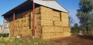 Oaten Hay 8x4x3 Bales shedded.