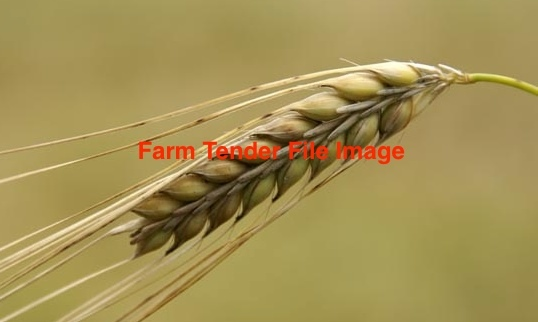 F 2 Barley Wanted 265 m/t.