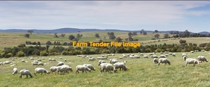 WANTED Sheep Agistment Bendigo and surrounds