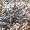 Oaten / Vetch Hay $110 per tonne