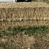 Clover & Rye Hay 550kg 8x4x3 Bales
