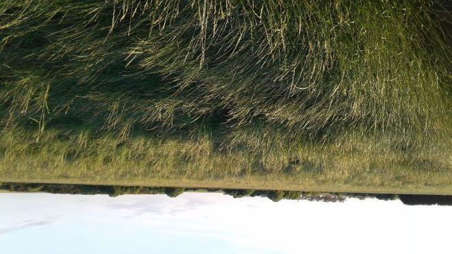 Perennial Ryegrass Hay  Rounds