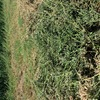 1000 x Lucerne Hay Small Bales - 2nd & 3rd cut - A grade