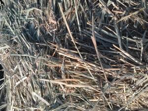 Wheaten Hay 8x4x3 Bales