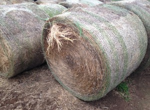 Grass / Pasture Hay Round Bales For Sale