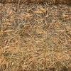 2019 Wheaten Hay