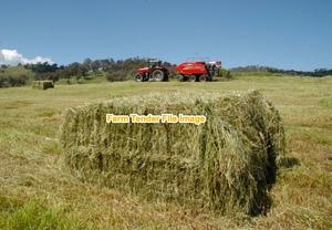 Rye Grass hay  8x4x3 Bales