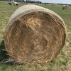 Rye round bales
