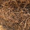 Pea Straw Small Square Bales