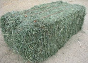 Teff Grass Seed. Makes High Quality Hay From Multiple Cuts